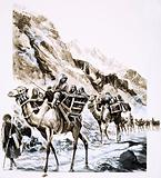 A camel train travels through the Khyber Pass