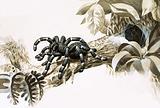 Bird-eating spider of the Amazon