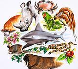 Unidentified montage of animals