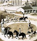 Ponies exercising