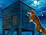 Fox at the chicken hut