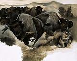 Charging buffalo