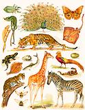 Assorted animals with interesing coloration