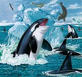 Killer whales and seals