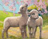 Two lambs eating blossom in the spring