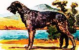 Irish wolf-hound