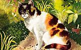 Tortoiseshell-White cat