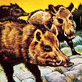 A sounder of boars