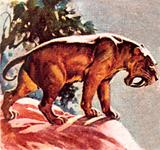 Sabre toothed tiger