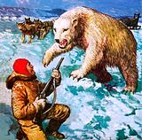 Vilhjalmar Stefansson being attacked by a polar bea