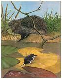Hedgehog and vole