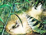 Fish That Fires Bullets –  the archerfish uses water as ammunition