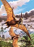 Pteranodon (top) and Rhamphorhynchus (bottom)