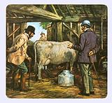 The first milking machines in the late 19th century