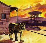 The lions were so confident, they strolled along the railway platform