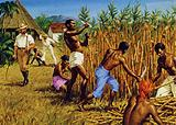 Slaves working on a plantation in the West Indies