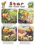 Star the Little Foal