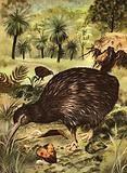 Wonders of Nature: The Worlds Strangest Bird