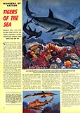Wonders of Nature: Tigers of the Sea