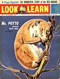 Mr. Potto –  Africa's Bush Baby