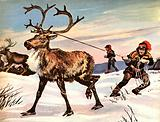 Wonders of Nature: Rudolph's Nose is Never Red…