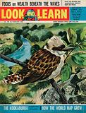 The Kookaburra –  laughter-bird of Australia