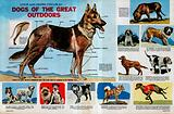 Look and Learn Focus on Dogs of the Great Outdoors