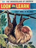 The Laziest Animal in the World –  the Sloth