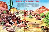 Wonders of Nature: Animals of the Desert Lands