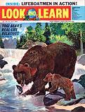 Wonders of Nature: Yogi Bear's Real-Life Relatives
