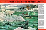 Wonders of Nature: Wild Life in the Frozen Arctic