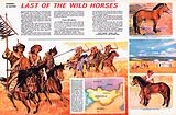 Wonders of Nature: Last of the Wild Horses