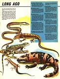Lizards: A Legacy from Long Ago