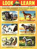 Picture Quiz –  dogs