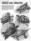 Wonders of Nature: Turtles and Terrapins