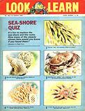 Picture Quiz –  Sea-Shore Quiz