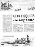 Giant Squids –  Do They Exist?