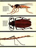 The Wonderful World of Insects
