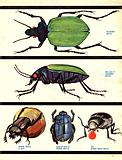 The Wonderful World of Insects: Design for Survival