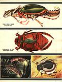 The Wonderful World of Insects: Fierce Flesh-Eaters