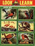Picture Quiz –  Birds