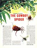 Wonders of Nature: The Cowboy Spider