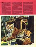 Wonders of Nature: Tiger, Tiger…