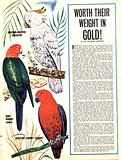 Worth Their Weight in Gold! Tropical birds.