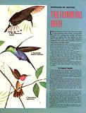 Wonders of Nature: The Humming Bird