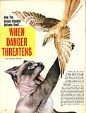 Wonders of Nature: When Danger Threatens
