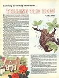 Telling the Bees. A story by Alan C. Jenkins