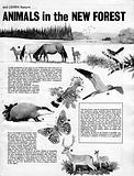 Plants and Animals of the New Forest