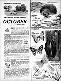 This Month in the Country: October