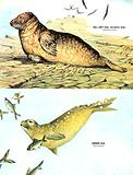 Animal Families: The Seals of Great Britain